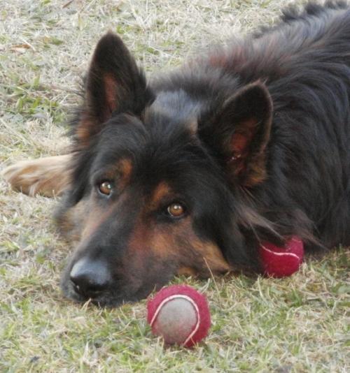 Dogball1
