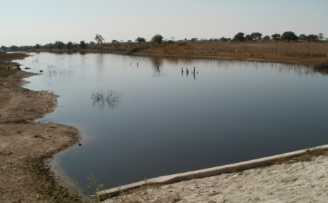 The Boteti River, just before it reaches Lake Xau
