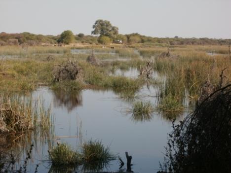Boteti River at Makalamabedi