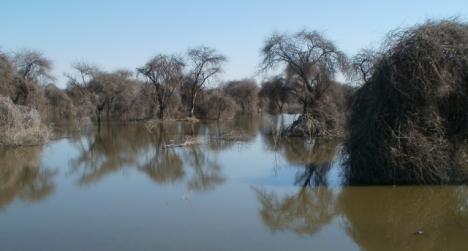 Lake Ngami, 23 May 2013