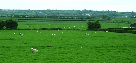 Fields at Axbridge, Somerset. Is the animal by the fience on the right a llama? 4 May 2005